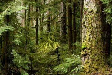 Притча о пяти мудрецах, которые заблудились в лесу